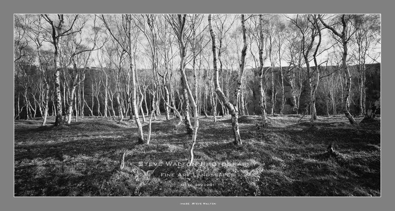 Bolehill Birches