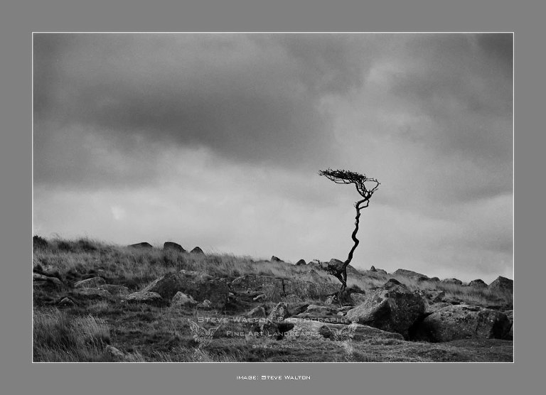 Moorland Hawthorn