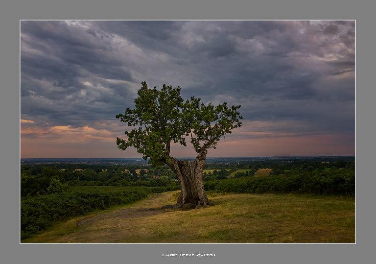 Bradgate Park oak tree